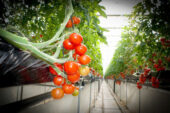 Eskişehir'de sağlıklı ve güvenilir sebze üretimi