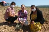 Muğla'da Lavanta Hasat Şenliği yapıldı