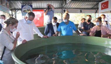 Tedavi edilen 4 caretta caretta ile 25 yavru denizle buluştu