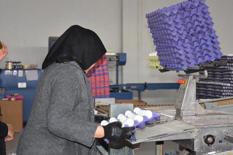 Afyonkarahisar'daki yumurta üreticileri İsrail pazarına da yöneldi