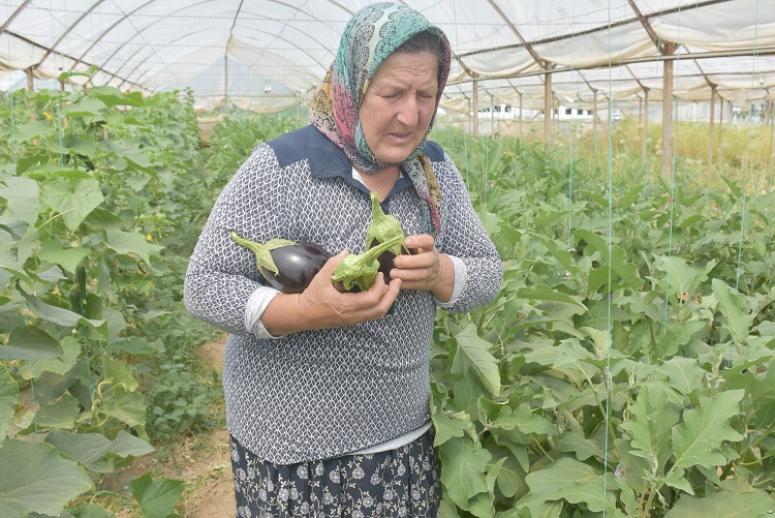 Organik tarım yapan çiftin başarısı örnek oldu