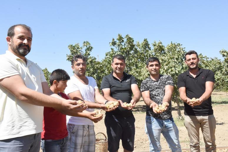 Aydın'da kuru incir tezgâhlarda yerini almaya başladı
