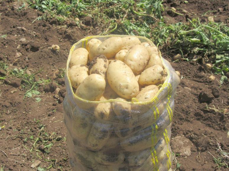 """""""Başvuran herkese patates ihracatı izinlerini veriyoruz"""""""