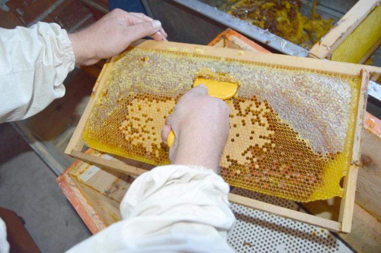 Doğal bitki örtüsünden bal üretimi başladı