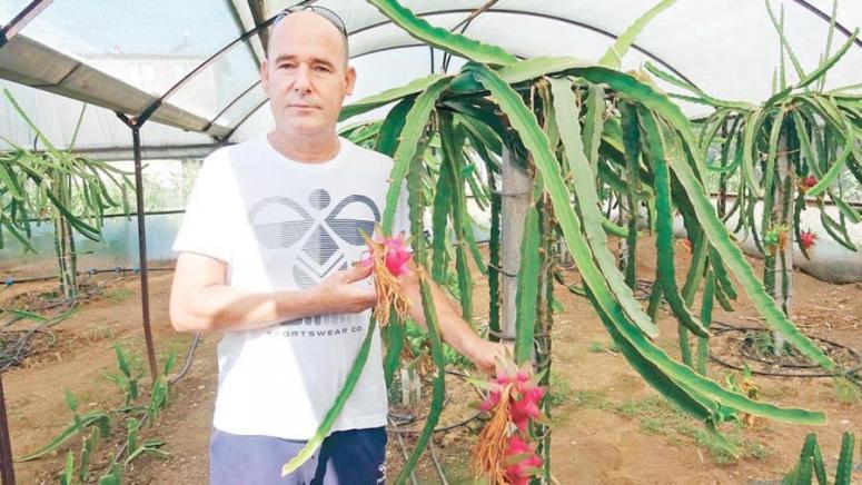 Ejder meyvesini Tayland'da gördü Aydın'da yetiştiriyor