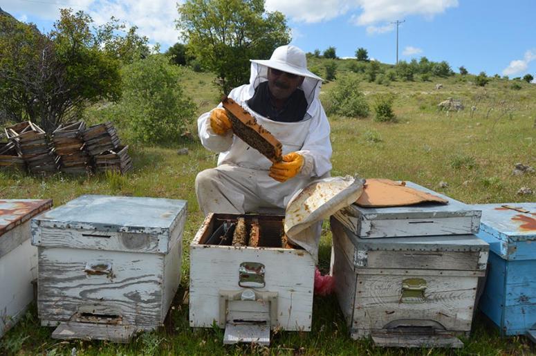 Gezginci Arılar Kocatepe'de iş başında