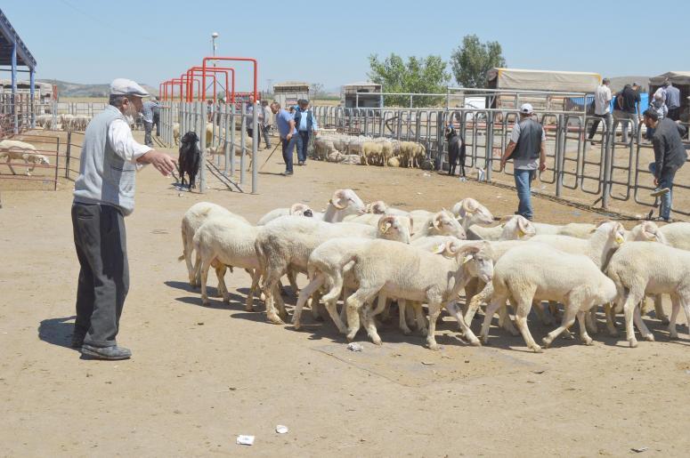Hayvan pazarında bayram yoğunluğu artıyor