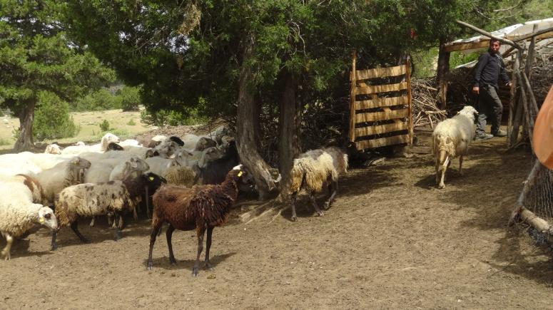 Hayvan pazarları dezenfekte edilerek açılıyor