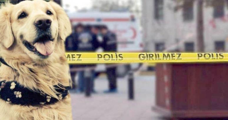 Köpek kavgasında 1 ölü 1 yaralı
