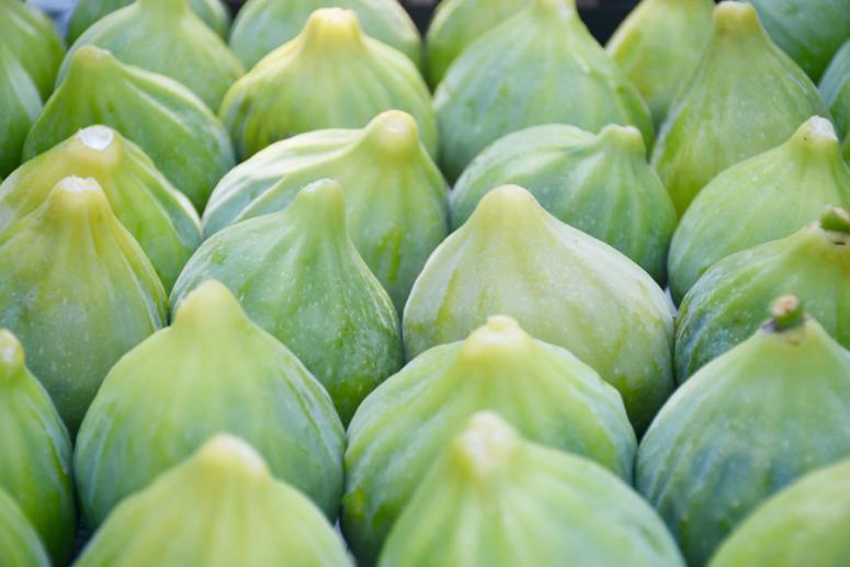 """Manisa'da """"yediveren inciri"""" hasadı başladı"""