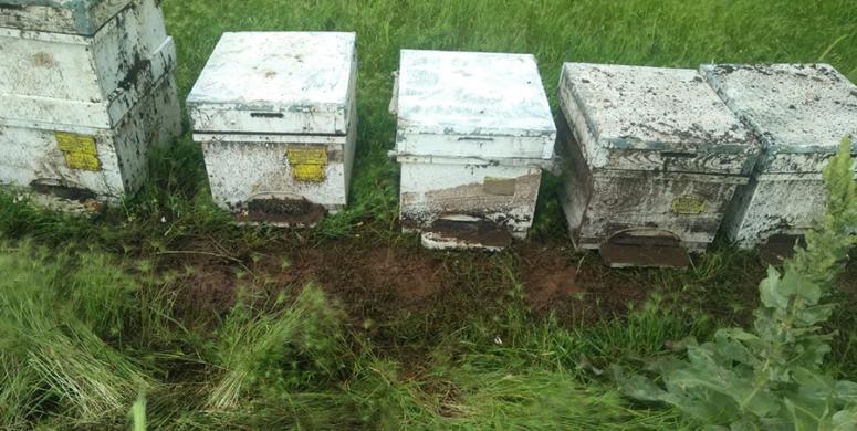 Sel sularının altında kalan kovanlardaki arılar telef oldu