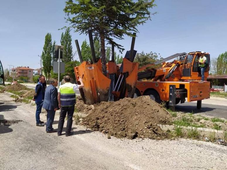 Tatarlı'da ağaçlar sökülerek başka yere dikildi
