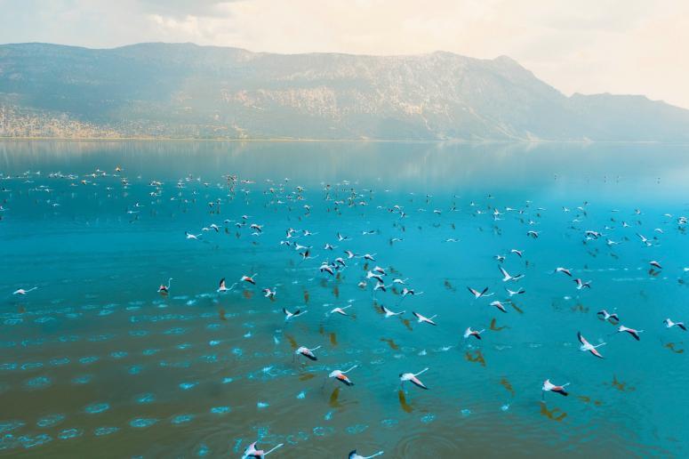 """""""Acıgöl'de binlerce flamingo var"""""""