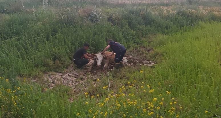 Balçığa saplanan ineği itfaiye ekipleri kurtardı