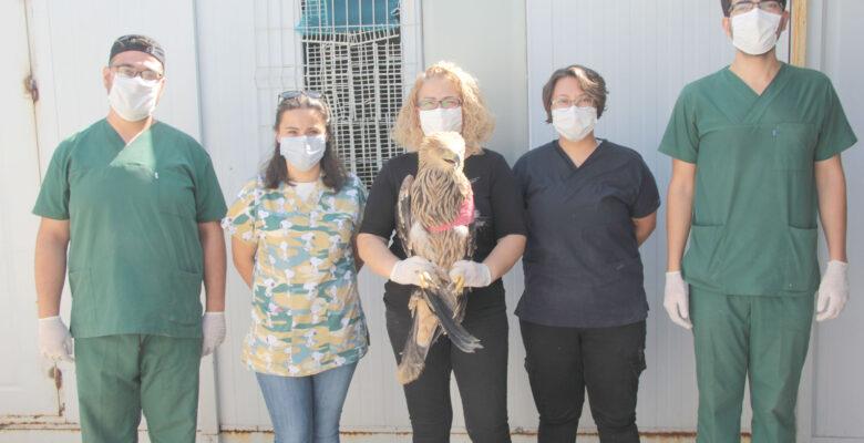 Ateşli silahla vurulan şah kartal tedavi altına alındı