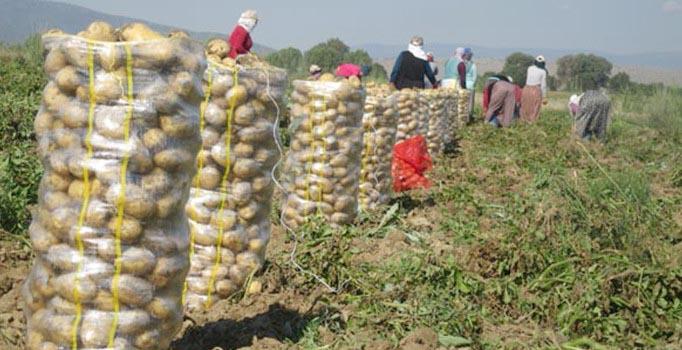 Patateste fiyat artışı beklenmiyor