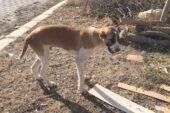 Tedavi edilen sokak köpeğinin Son Hali