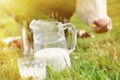 Ticari süt işletmelerince Temmuz ayında 825 bin 132 ton inek sütü toplandı