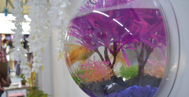 Bu kafeye gelenler çiçek sulayıp balık da besliyor