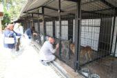 Salgın önlemleri kapsamında Odunpazarı Geçici Hayvan Bakımev bir süreliğine kapatıldı