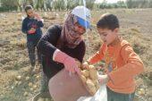 Afyonkarahisar'ın Şuhut ilçesinde kışlık patates hasadı devam ediyor