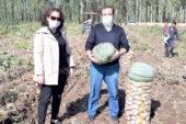 Bal kabağı ekimi de yapılarak ek kazanç sağlanıyor