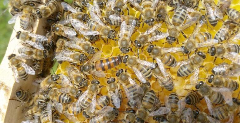 Bal üreticileri arı kovanlarını kışa hazırlandı