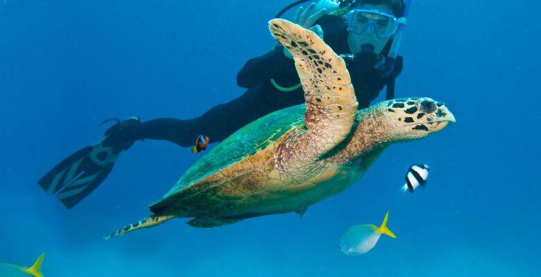 İklim değişikliği, Büyük Set Resifi'ndeki mercanların yarısını yok etti