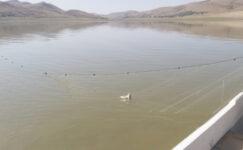 Yasak su ürünleri av kontrolleri aralıksız devam ediyor