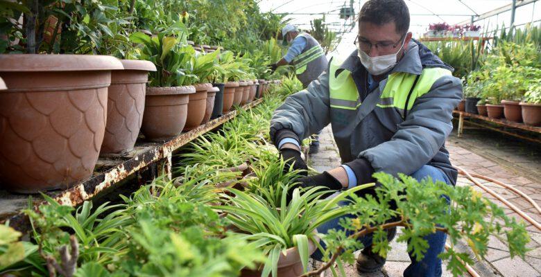 Yılda 220 bin çiçek yetiştiriliyor