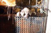 Kafası demir kapı parmaklıklarına sıkışan köpeği itfaiye ekipleri kurtardı