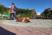 Eskişehir'de güneşli havayı fırsat bilen vatandaşlar kendilerini dışarı attı