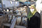 Afyonkarahisar'da bir çiftçiye ait 7 küçükbaş hayvanın zehirlenerek telef edildiği iddia edildi