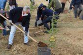 Dumlupınar'da 500 sedir ağacı toprakla buluştu
