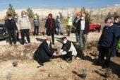 Hisarcık'ta maden sahaları lavanta kokacak
