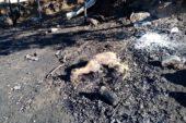 Ahır yangınında 70 küçükbaş hayvan telef oldu