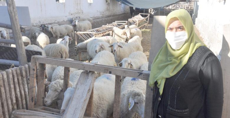 """""""Koyunlarım zehirlendi"""" iddiası"""