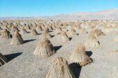 200 nüfuslu köy 5 ayda 1 milyon dolarlık ihracat yapıyor