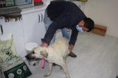 Hisarcık'ta yaralı köpeğe belediye ekipleri sahip çıktı