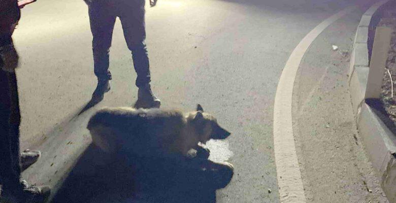 Denetime çıkan kaymakam yaralı köpeğin imdadına yetişti