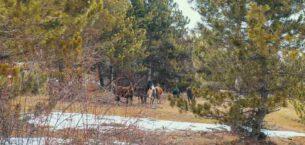 Akdağ Tabiat Parkı kışın bir başka güzel