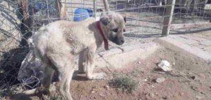 Akdağ'da donmak üzere olan köpeği vatandaşlar kurtardı