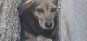 İki bina arasına sıkışan köpek bakın nasıl kurtarıldı