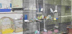 Evde kalan vatandaş yalnızlığını evcil hayvanlarla giderdi