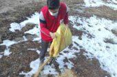 Hisarcık Kızılay gönüllüleri kuşlar için doğaya yem bıraktı