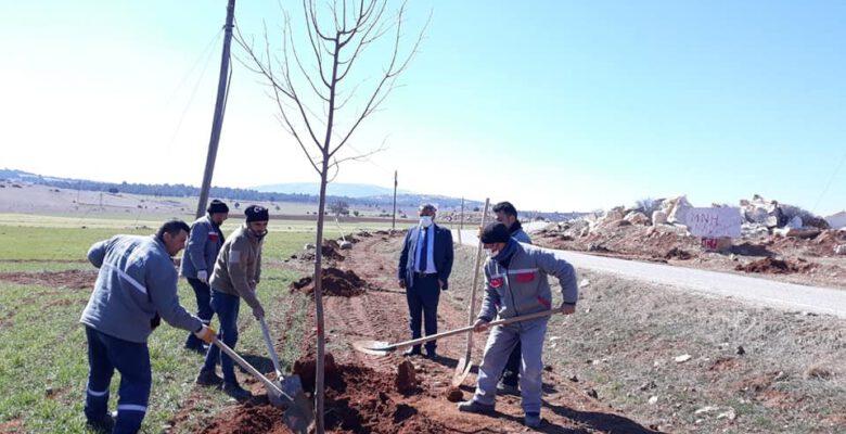 Altıntaş-Gediz yolunda ağaçlandırma çalışmaları