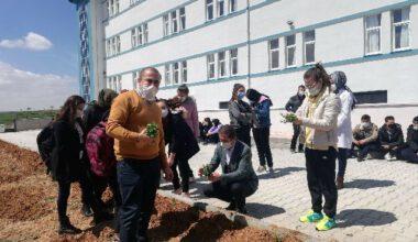 Liseli öğrenciler okul bahçesine kekik fidanı dikti