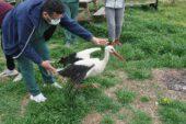 Tedavisi tamamlanan tavşan, kerkenez ve baykuş doğaya salındı