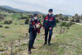Eskişehir'de jandarma ekipleri tarafından yaralı halde bulunan kızıl şahin tedavi altına alındı.