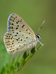 Kelebek fotoğrafları hayran bıraktı